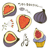 Hand drawn figs and fig cupcake Royalty Free Stock Photos