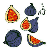 Hand drawn figs set. Eco food. Illustration in vector format Stock Photos
