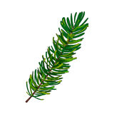Hand drawn fir tree twig, branch, spruce. Christmas decoration element, sketch style vector illustration on white background. Single fir tree twig, branch Stock Photography