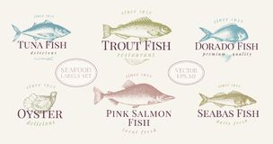 Hand drawn fish and seafood labels set in retro style. Vector logo templates. Labels can be use for restaurant menu fish. Shop market. Vintage illustration Stock Images