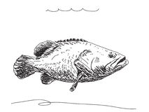 Hand drawn fish Stock Image