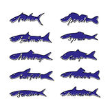 Hand drawn fish species. Hand drawn fish species with lettering Royalty Free Stock Photo