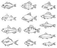 Hand drawn fish Stock Image