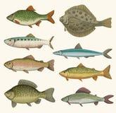 Hand drawn fish Royalty Free Stock Photography