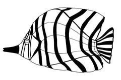 Hand Drawn Fish Stock Photo