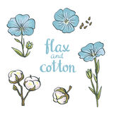 Hand drawn flax and cotton. Vector design isolated on white background Royalty Free Stock Images