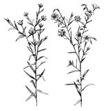 Hand drawn flax flowers and seeds. Hand drawn black and white flax flowers and seeds - vector illustration Royalty Free Stock Photo
