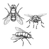 Hand drawn flies Stock Images