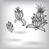 Hand Drawn Floral Elements for Design Royalty Free Stock Image