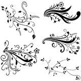 Hand Drawn Floral Elements Royalty Free Stock Photo