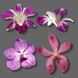 Hand drawn  floral set with realistic orchids. EPS 10 Stock Photos