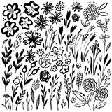 Hand drawn floral set. Vector floral elements. Collection with leaves and flowers. Hand drawn floral set. Black silhouettes of flowers and grass. Vector floral Stock Photo