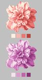 Hand drawn flower 02. Hand drawn - beautiful flower bouquet design with Simple background Royalty Free Stock Photos