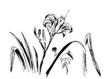 Hand-drawn flower background Stock Image