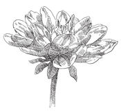 Hand drawn flower Royalty Free Stock Photo