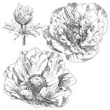 Hand drawn flower Royalty Free Stock Photos