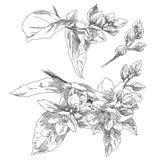 Hand drawn flower Stock Image