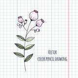 Hand drawn flower color pencil. Vector illustration Royalty Free Stock Images