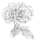 Hand drawn flower Stock Photography