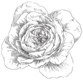 Hand drawn flower Royalty Free Stock Images