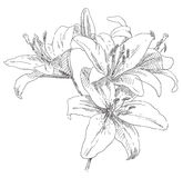 Hand drawn flower Stock Images