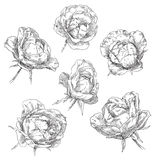 Hand drawn flower Royalty Free Stock Image