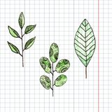 Hand drawn flower  and green graphic leaf color. Pencil Royalty Free Stock Images