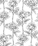 Hand drawn flowering roses. Seamless pattern with roses. Vector illustration Stock Images