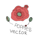 Hand drawn flowers background. Poppies frame Stock Photos