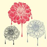 Hand-drawn flowers of dahlia Royalty Free Stock Photos