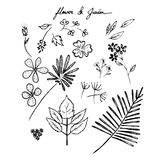 Hand drawn flowers and gardens Royalty Free Stock Images