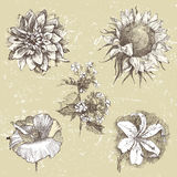 Hand drawn flowers Royalty Free Stock Image