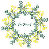 Hand drawn flowers mimosa. Vector. Calligraphic hand written phrase and hand drawn flowers Stock Images