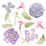 Hand drawn flowers set Stock Images