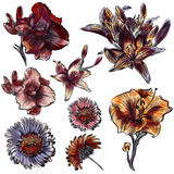 Hand drawn flowers set vintage watercolor style Stock Images