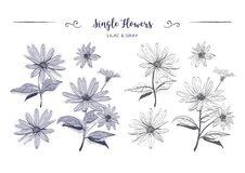 Hand drawn flowers sketch Chamomiles, daisies. Coloring page, Jerusalem artichoke flower, Botanical floral. Hand drawn flowers sketch Chamomiles, daisies Stock Photos