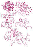 Hand drawn flowers Royalty Free Stock Photos