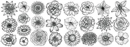 Hand drawn flowers, vector illustration. Floral vintage sketch. Hand drawn flowers, vector illustration. Big set of different types garden flowers in sketch vector illustration