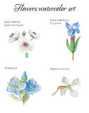 Hand drawn flowers watercolor set Royalty Free Stock Photos