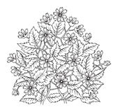 Hand drawn flowers on white background Royalty Free Stock Images