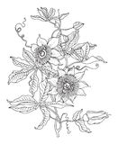 Hand drawn flowers on white background Royalty Free Stock Photos