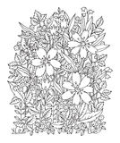 Hand drawn flowers on white background Royalty Free Stock Image