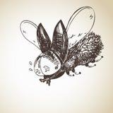 Hand drawn flying bug Stock Image