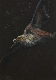 Hand drawn flying eagle, pastel drawing. Hand drawn colorful pastel drawing of a flying eagle on black background Stock Image