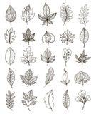Hand Drawn Foliage Monochrome Set Royalty Free Stock Images