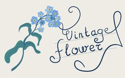 Hand drawn forget-me-not blue flower. Stock Images