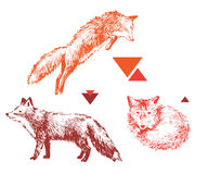 3 hand drawn foxes in different poses. 3 bight hand drawn foxes in different poses on white background Royalty Free Stock Photo