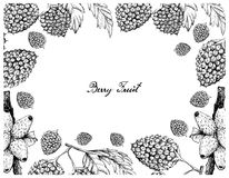 Hand Drawn Frame of Balloon Berries and Medinilla Fruits. Berry t, Illustration Frame of Hand Drawn Sketch of Medinilla Magnifica or Showy Medinilla and Balloon Stock Photos