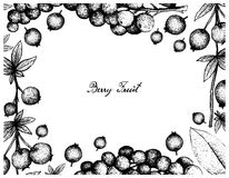 Hand Drawn Frame of Calafate Berry and Antidesma Thwaitesianum Fruits. Berry Fruit, Illustration Frame of Hand Drawn Sketch of Fresh Calafate Berry or Berberis Royalty Free Stock Image