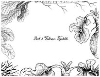 Hand Drawn Frame of Horseradish and Swede Royalty Free Illustration